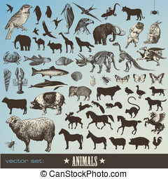 Animals set - vector set: animals - collection of 60...