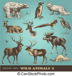 Wild animals 2 - vector set: wild animals 2