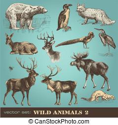 sauvage, animaux, 2