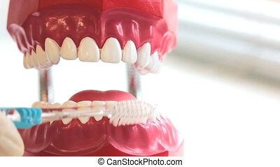 Teeth brush cleans toy jaw on table in dental surgery....