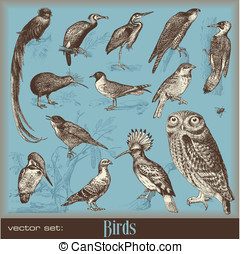 Birds - vector set: birds - variety of vintage bird...