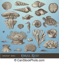 Vector set: coral reef - vector set: coral reef - variety of...