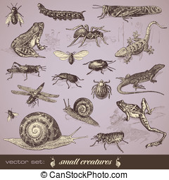 Small creatures - vector set: small creatures - collection...