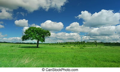 Lonely tree on a meadow against sky with clouds