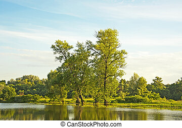 Poplar tree over lake - Poplar tree over forest lake, Kiev,...