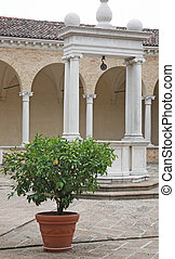 plant with ripe lemon yellow in the middle of the cloister near a well in the convent of the friars