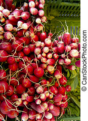 Radish collection