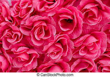 Beautiful pink color roses background - Beautiful pink color...