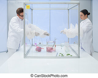 experimenting on biological matter in sterile chamber - two...