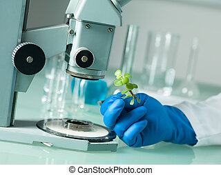 analyzing a plant under the microscope - image showing a...