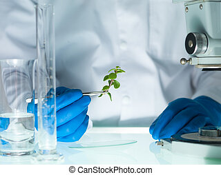 analyzing a plant in the lab - image showing a person's...