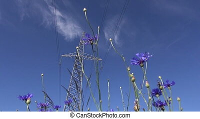 electrical tower and cornflowers - High voltage electrical...