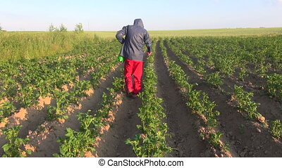 spraying summer potato field - farmer with protective...