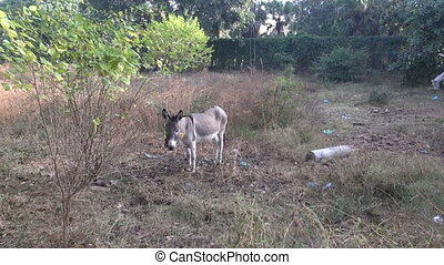 young lonely donkey in park, Punjab,India
