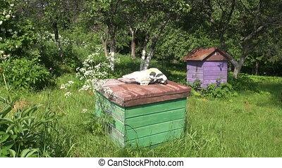 horse cranium on old beehive roof in summer garden