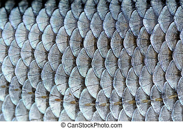 Real Roach Fish Scales Background - A close-up of roach...