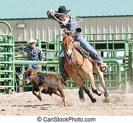 Cowboy Roping Calf in Rodeo - Young cowboy roping a calf...