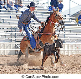 Cowboy Roping Calf - Young cowboy dismounting after roping a...