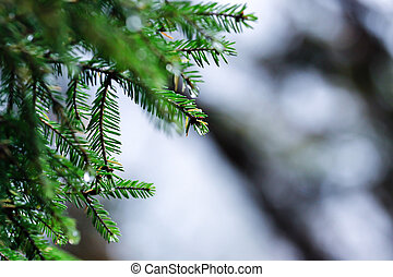 Tree autumn vs. winter