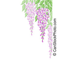 Wisteria flowers - Wistaria flowers, bitmap graphic can be...