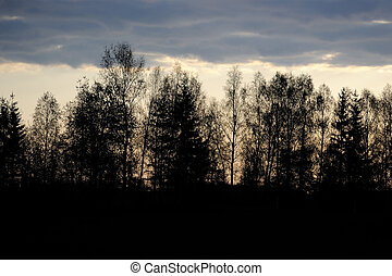 Black Trees at Dusk - Black trees and dark clouds at dusk