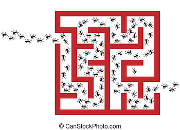 Ant Infestation Pest Problem Maze P