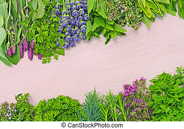 herbs - background of different herbs