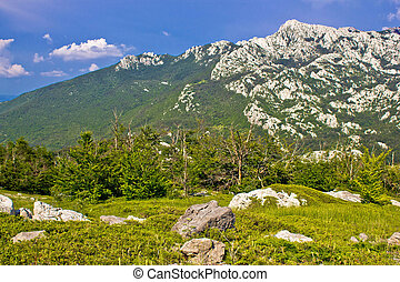 Crnopac peak of Velebit mountain - Crnopac peak nature of...