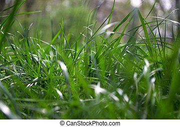 Green-fodder - Green grass Shallow depth of field