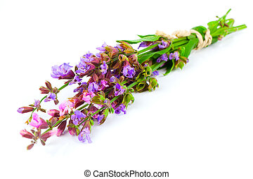 Bunch of flowering sage, over white background.