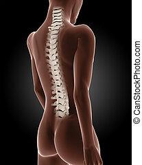 Female medical skeleton