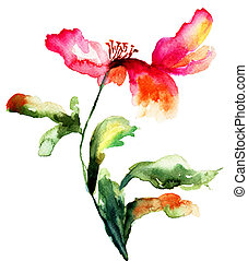 Colorful poppy flower, watercolor illustration