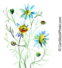 Camomile flowers, watercolor illustration