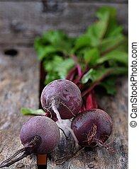fresco, orgánico, remolacha, raíz