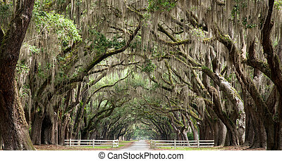 Oak Trees - Live oak trees create a tunnel effect.