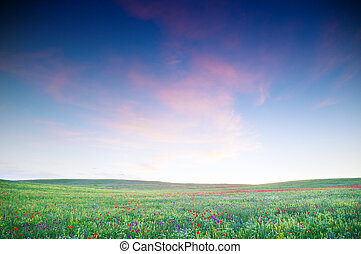 green field with blooming flowers