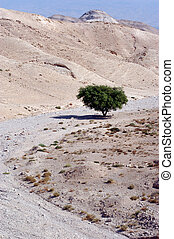 The Judean Desert - Israel - One tree on a stream bed in the...