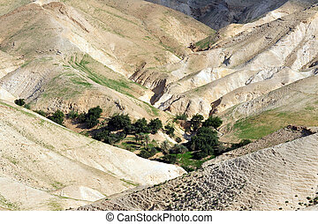 Judea Desert - Israel - Landscape view of oasis in the Judea...