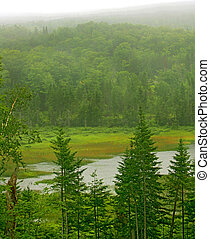 foggy greens - a foggy and rainy day over a bright green...