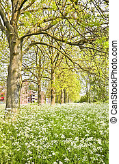 Suburb in spring with fields of white flowers