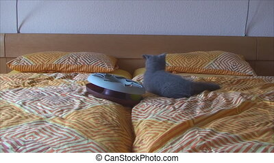small kittens play on the bed - small kittens...