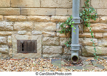 Ivy covered iron drainpipe - Cast iron drainpipe against a...