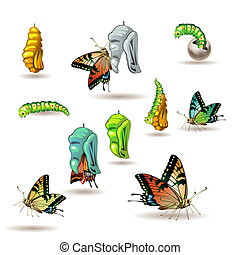Butterfly stages with cocoon on white background