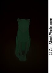 An Egyptian cat onyx - Glowing in the darkness cat onyx