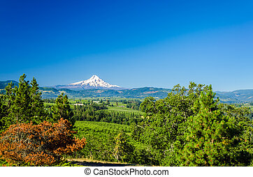 Mt. Hood and Valley
