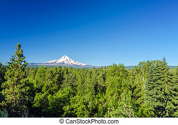 Forest and Mt. Hood