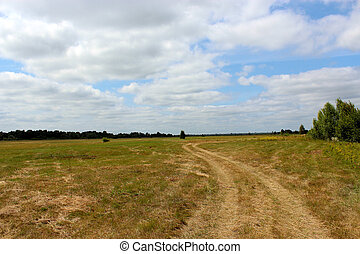beautiful summer landscape with rural road in the field
