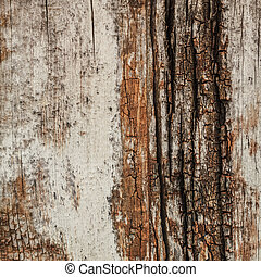 Ancient Weathered Cracked Tree Trunk Lateral Section - Old...