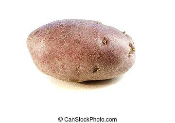 potatoe  - One potatoe on white ground