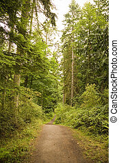 Pacific Northwest Trail - A trail in a park in the Pacific...